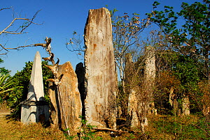 Malagasy cemetery, Malio village, Andodahela National Park. South Madagascar, March 2005.  -  Enrique Lopez-Tapia