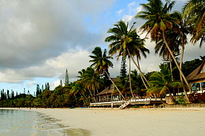 Coconut trees (Cocos nucifera) on beach with restaurant, Ile des Pins / Isle of Pines, New Caledonia, September 2008  -  Enrique Lopez-Tapia