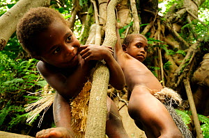 Children playing in the branches of a tree. Tanna Island, Tafea Province, Vanuatu, September 2008.  -  Enrique Lopez-Tapia