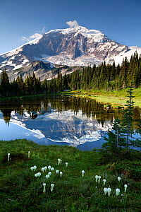 Mount Rainier reflected in tarn above Mystic Lake in Mount Rainier National Park, Washington, USA, August 2014.  -  Kirkendall-Spring