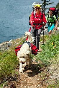 Hikers with dog on the Lake Chelan Trail between Prince Creek and Meadow Creek, Lake Chelan Sawtooth Wilderness, Washington, USA, May 2014. Model released.  -  Kirkendall-Spring