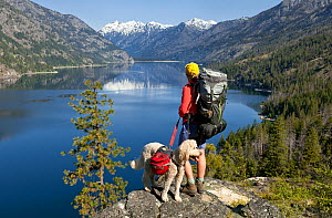 Backpacker with dog looking out over lake on the Lake Chelan Trail between Moore Point and Stehekin, Lake Chelan-Sawtooth Wilderness, Washington, USA, May 2014. Model released. - Kirkendall-Spring