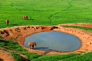 Aerial view of Elephants (Loxodonta africana) at watering hole in the rainy season, Tsavo East National Park, Kenya. - Denis-Huot