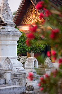 Wat Khili Temple, with flowers in the foreground, Luang Prabang, Laos, March 2009.  -  David Noton