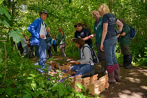 Ian White and Nida Al-Fulaij of the People's Trust for Endangered species and Lorna Griffiths of Nottinghamshire Wildlife Trust planning where to place nestboxes containing Hazel dormice (Muscardinus...  -  Nick Upton