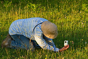 Plant enthusiast photographing a Bee orchid (Ophrys apifera) during a guided wildflower walk on Chancellor's Farm reserve, managed by Somerset Wildlife Trust. Mendip hills near Priddy, Somerset, UK, J...  -  John Waters