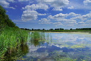 View of Reedham water, How hill, Norfolk Broads National Park, England, July 2014. - Gary  K. Smith