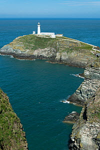 Lighthouse on South Stack RSPB Reserve, Anglesey, Wales. July 2014.  -  Adrian Davies