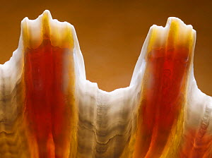 Close-up of a shell, UK.  -  Stephen  Dalton