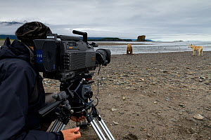 Cameraman filming Grizzly bear (Ursus arctos horribilis) and Grey wolf (Canis lupus) on production for 'Bears'. Katmai National Park, Alaska, July 2012.  -  Oliver Scholey