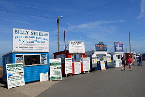 Boat tour huts along Seahouses Harbour, Farne Islands, Northumberland, England, UK, July 2013.  -  Michel  Poinsignon