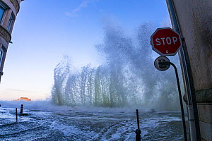 Spring tide waves lashing the seafront and street, Saint-Malo, Ille-et-Vilaine, Brittany, France. February 2014.  -  Christophe Courteau
