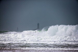 Rough sea during winter storm in Baie des Trepasses / Bay of the Dead, with La Vieille ('The Old Lady') Lighthouse visible in distance. Plogoff, Finistere. Brittany, France, February 2014. - Christophe Courteau