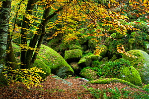 The 'Chaos of Rocks' in autumn, Huelgoat forest, Finistere, Brittany, France, October 2007.  -  Christophe Courteau