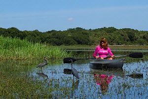 Bird watcher in a kayak with Tricoloured Heron, (Egretta tricolor) and Little Blue Heron (Egretta caerulea) Myalka River State Park, Sarasota, Florida , USA, August 2014.  -  Lynn M Stone