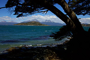 View across the Beagle Channel from Tierra del Fuego, South America, February 2011.  -  Tim  Laman