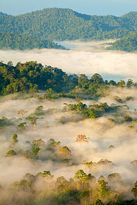 View over lowland dipterocarp rainforest at dawn. Danum Valley, Sabah, Borneo, May 2011. - Alex  Hyde
