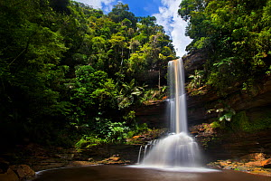 Takob-Akob Falls plunging 38 metres through the rainforest. Southern plateau edge, Maliau Basin, Sabah, Borneo, May 2011.  -  Alex  Hyde