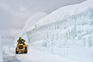 Snow plow on the road to the top of Mount Dalsnibba, with high cliff of snow, Geirangerfjorden, Norway, June 2012.  -  Erlend  Haarberg