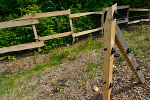 Quarantine area with electric fencing for European bison / Wisent (Bison bonasus) prior to release into Tarcu mountains nature reserve, Natura 2000 area, Southern Carpathians, Romania. May 2014. - Wild  Wonders of Europe / Widstrand