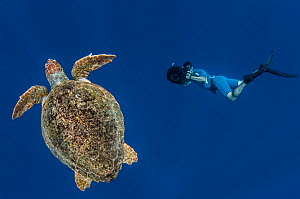 Loggerhead turtle (Caretta caretta) with diver, Los Gigantes, South Tenerife, Canary Islands, Atlantic - Jordi  Chias