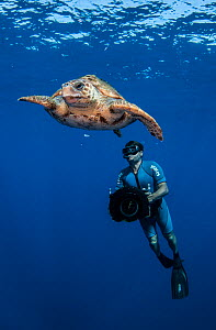 Underwater cameraman filming Loggerhead turtle (Caretta caretta) Los Gigantes, South Tenerife, Canary Islands, Atlantic Ocean. - Jordi  Chias