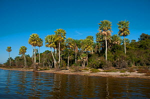 Wetland landscape and forest. Ibera Marshes, Corrientes Province, Argentina  -  Gabriel Rojo