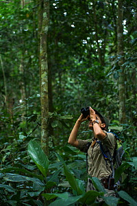 Wilderness Safari guide Stephanie Courtines looking through binoculars in forest, Ngaga, Republic of Congo (Congo-Brazzaville), Africa, June 2013. Model released.  -  Pete Oxford