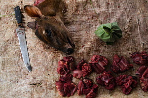 Butchered Peter's duiker (Cephalophus callipygus) killed for bushmeat. Mbomo market, Republic of Congo (Congo-Brazzaville), Africa, June 2013. - Pete Oxford