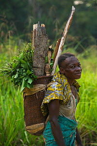 Local woman carrying traditional basket, Republic of Congo (Congo-Brazzaville), Africa, June 2013.  -  Pete Oxford