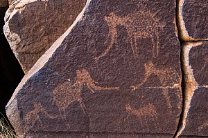 Petroglyph by San Bushman of Elephant. Private game ranch, Great Karoo, South Africa. - Pete Oxford