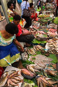 Mixed reef fish and octopus for sale, Suva Seafood Market, Viti Levu, Fiji, South Pacific, April 2014.  -  Pete Oxford