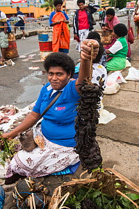 Local woman with string of live Mud crabs (Scylla sp) for sale, Suva Seafood Market, Viti Levu, Fiji, South Pacific, April 2014.  -  Pete Oxford