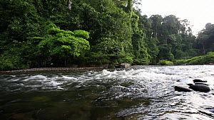 View of a river flowing through rainforest, Danum Valley Conservation Area, Sabah, Borneo, Malaysia, 2014.  -  Christophe Courteau