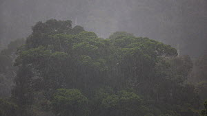View overlooking a rainforest canopy, with clouds and heavy rain, Danum Valley Conservation Area, Sabah, Borneo, Malaysia.  -  Christophe Courteau