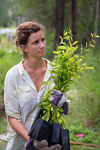 University student holding trees to be planted for the Australian Koala Foundation's habitat restoration program, Quinlans Property, Queensland, Australia. - Suzi Eszterhas