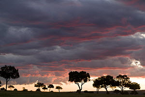 Trees silhouetted against sunset and clouds, Masai-Mara Game Reserve, Kenya. March 2010.  -  Denis-Huot