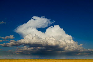 Clouds over the plains in the dry season, Amboseli National Park, Kenya. October 2010.  -  Denis-Huot