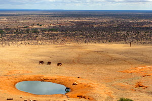 Aerial view of African elephants (Loxodonta africana) and African buffalo (Syncerus caffer) at a water hole during the dry season, Tsavo East National Park, Kenya. October.  -  Denis-Huot