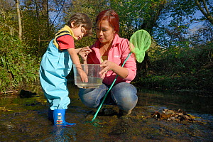 Young boy reaching into plastic tank held by his mother for Pond snails he has caught whilst fishing in stream, Bristol, UK, October 2014. Model released.  -  Nick Upton