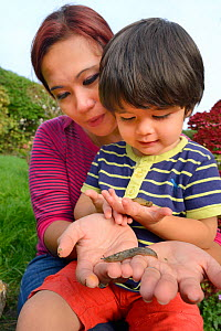 Young boy and mother holding Leopard / Great grey slugs (Limax maximus) found in garden, Bristol, UK, October 2014. Model released.  -  Nick Upton