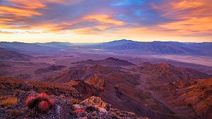 Sunrise over Death Valley (from Corkscrew Peak) with Cottontop cactus  (Echinocactus polycephalus). View extending all the way to Badwater  (center left near the horizon), the Mesquite Dunes  (right),...  -  Floris  van Breugel