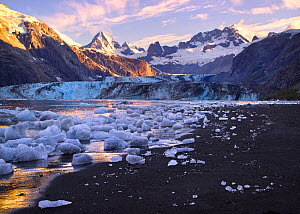 Icebergs collecting at low tide on a black sand beach at the head of the Johns Hopkins Inlet, with a view of the Johns Hopkins Glacier and the Fairweather Mountains, Glacier Bay National Park, Alaska,...  -  Floris  van Breugel