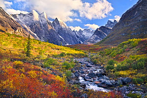 Autumnal landscape with snow, Arrigetch Peaks region of Brooks Range, Gates of the Arctic National Park, Alaska, USA, August 2014.  -  Floris  van Breugel