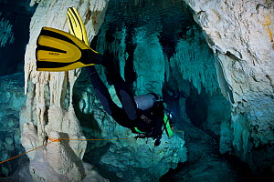 Scuba diver following a line marking the route through underwater caverns and tunnels forming an underground river system known by the local Maya people as Xilbalba (place of fear). Riviera Maya, Yuca...  -  Brandon Cole