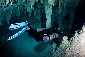 Professional cave diver practising the frog kick,  equipped with twin side-mount tanks, guiding others on a tour along a marked route through caverns and tunnels accessed through cenote in the jungle,...  -  Brandon Cole