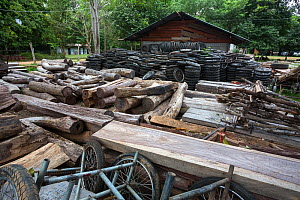 Siam rosewood tree (Dalbergia cochinchinensis) timber and motorcycle wheels, confiscated from poachers, stored as evidence, Thap Lan National Park, Dong Phayayen-Khao Yai Forest Complex, eastern Thail... - Ann  & Steve Toon