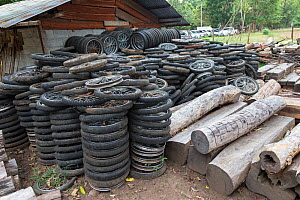 Siam rosewood tree (Dalbergia cochinchinensis) timber and motorcycle wheels, used by poachers to make carts for removing timber, stored as evidence, Thap Lan National Park, Dong Phayayen-Khao Yai Fore... - Ann  & Steve Toon