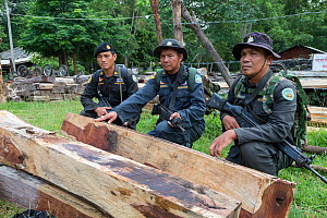 Thap Lan anti-poaching rangers with Siam rosewood tree (Dalbergia cochinchinensis) timber  confiscated from poachers, Thap Lan National Park, Dong Phayayen-Khao Yai Forest Complex, eastern Thailand, A... - Ann  & Steve Toon