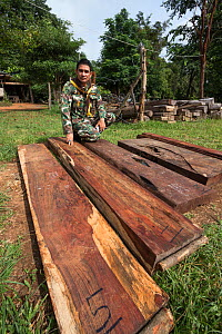 Thap Lan assistant chief Pattarapol Sunhua with Siam rosewood tree (Dalbergia cochinchinensis) timber confiscated from poachers, Thap Lan National Park, Dong Phayayen-Khao Yai Forest Complex, eastern... - Ann  & Steve Toon